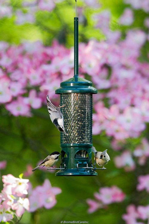 Squirrel Buster Standard Squirrel-proof Bird Feeder | Bird Feeder